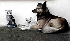 IMAGINARY FRIENDS (Damien Sass) Tags: friends dog statue wall deer together owl bambi anticipation lookingon