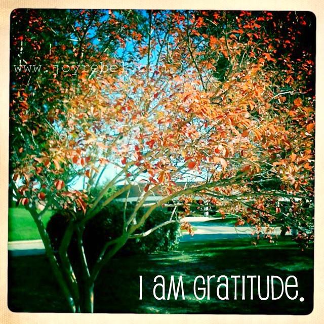 i am gratitude.