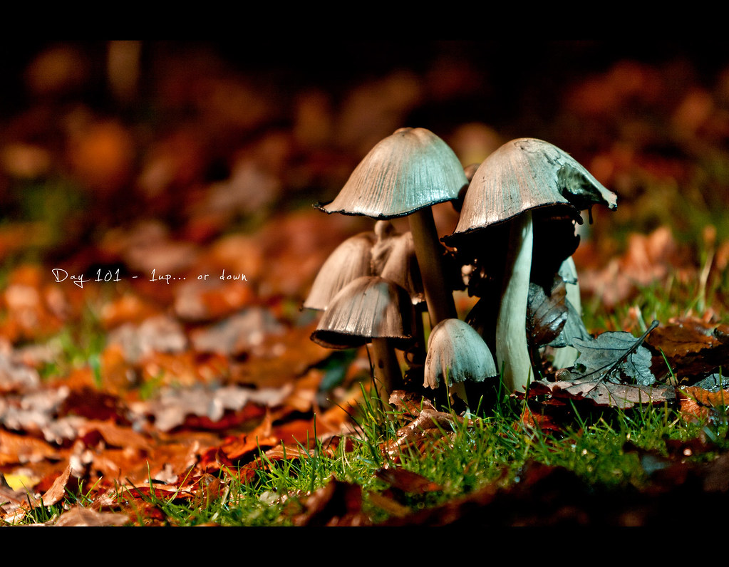 Day 101, Project 365, 101/365, Bokeh, Strobist, mushrooms, 1up, attention, ourdailychallenge, gels,