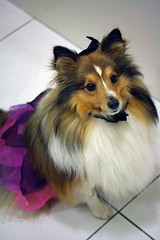 """Halloween witch • <a style=""""font-size:0.8em;"""" href=""""http://www.flickr.com/photos/55880040@N05/5193385542/"""" target=""""_blank"""">View on Flickr</a>"""