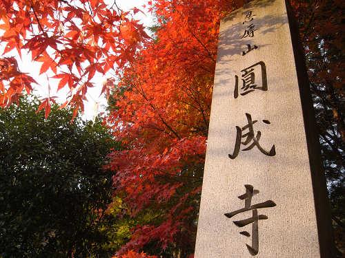 浄土式庭園に広がる見事な紅葉『円成寺』@奈良市