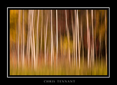 AB_D_f ([Chris Tennant]) Tags: autumn distortion abstract blur fall colors 100mm outoffocus foliage canon5d panning minimalist icm intentional intentionalcameramovement christennantphotography