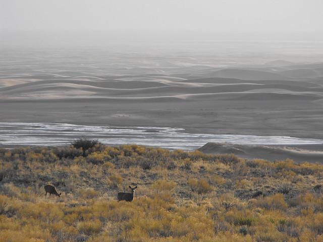 dune muleys