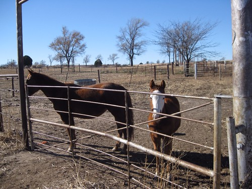 Arena Horse2