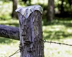 Fence Post (bitzy1957) Tags: fence post barbed wire nature