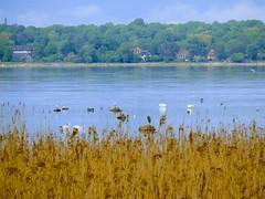 Veelinnud (Veeseire) Tags: veelinnud linnud vesi