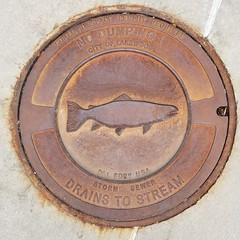 save our fish (Abby flat-coat) Tags: manhole cover metal fish lakewood colorado galaxys8 20170629141810sq