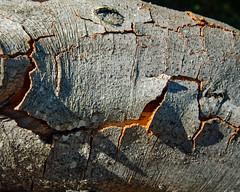 Trees at Knole (jimj0will) Tags: tree knole park knolepark historichouse nationaltrust woodland leaves bark branches grass ferns texture green sevenoaks kent england split crack