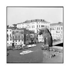 the besat • venice, italy • 2016 (lem's) Tags: minolta autocord venice venise venezia italy italia italie beast bete statue canal cuty ville