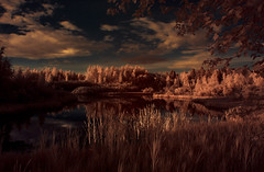 040 (petrisalonen) Tags: irphotography infraredphotography infrared ir720 water nature landscape sun yellow view clouds leafs channelmapping