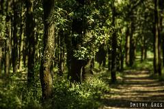 (Dmitry Gres) Tags: природа деревья зелень трава одесса украина воздух лето солнце отдых canon парк park фотошоп photoshop amateur любитель nature photo photographer фото фотограф summer sunny weather film movie cinematic 550d