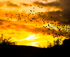 fiery-sky-&-birds- (ChicqueeCat) Tags: sunset orange fire sky silhouette birds nature landscape sunrise