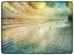 Beach chickens! (yosmama151) Tags: coast gulfcoast landscape seascape sea ocean gulf gulfofmexico islandlife island m3xtures mextures snapseed mobilephotography mobilephotographer iphoneographer iphoneography iphoneiphone6s shore texas galvestonisland galveston beach birds gulls seagulls
