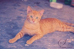 The big father for my cats and kittens ... (instagram: @Shyqa_Photography) Tags: cats kittens canoneos450d allbyme