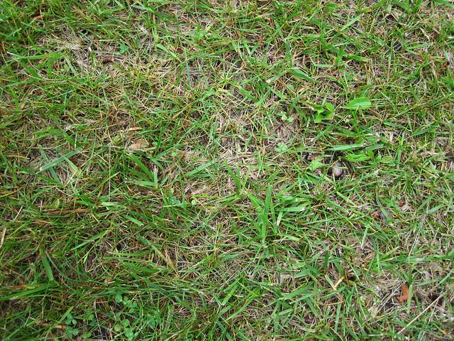 NH Grass