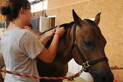 Braiding Dallas' mane (Montgomery Area Nontraditional Equestrians (MANE)) Tags: al mane pikeroad