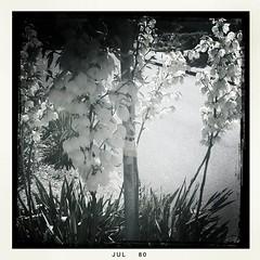 Summer Blossom 1