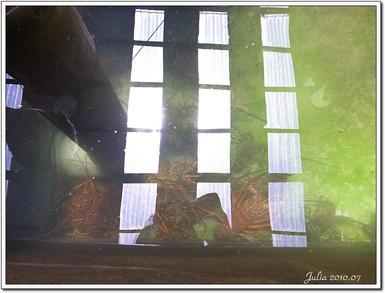 金車鮮蝦 (14)
