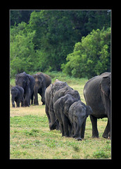 Discipline (Sara-D) Tags: nationalpark discipline sarad kaudulla saranga kaudullanationalpark sarangadevadealwis sarangadeva