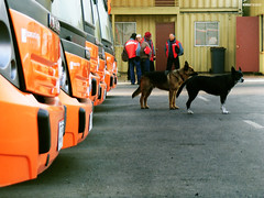 Veolia (donKurotashio) Tags: dogs perros urbantransport connex redbus transantiago lascondes huechuraba ciudadempresarial veolia regiónmetropolitana zonac peopleinwork