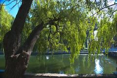 auf der Insel der Liebe (ipernity.com/doc/d-f [hat Suckr verlassen]) Tags: lake island see weide ukraine insel galicia willow ukraina ternopil jezioro   galicja galizien     wierzba tarnopol         oblastternopil