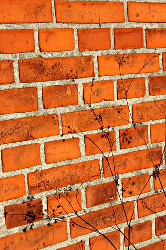 Sept 1/10 Brick wall by Jude Doyland, on Flickr