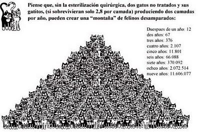 piràmide gats