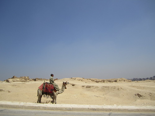 Want to go on a camel ride....? No!