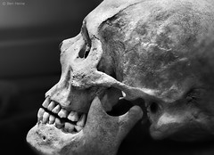 The Beauty of Bones - 1 (Ben Heine) Tags: old light blackandwhite inspiration history texture face mystery mouth dead skeleton nose photography death scary eyes energy lumire mort quality report ghost profile documentary athens os sharp greece digitalpainting anatomy bones expressive conceptual copyrights past biology grce journalism artifacts visage fantome vibration antiquity prehistory pass fossile archologie luminosity organism nationalarchaeologicalmuseum teethe humanskull theartistery effrayant ossements athne creativecomposition benheine crnehumain flickrunited samsungnx10 benheinecom thebeautyofbones botecrnienne