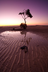 That tree (Mel Petrie) Tags: sunset tree australia brisbane canon5d wellingtonpoint