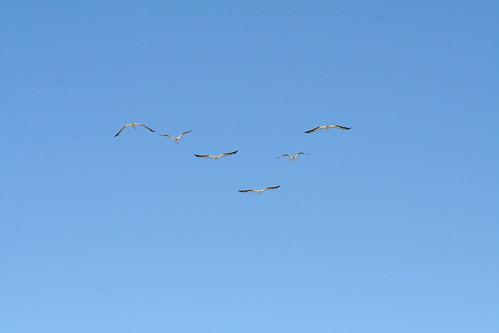 c Bodega Fort Ross 09102010 057