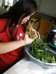 Sophia Cutting Dill