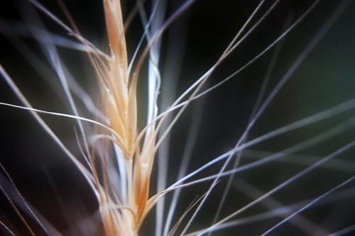 grass stalk