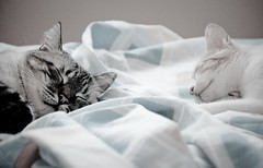 True happiness lies in the simple things ... (Ndia Monteiro) Tags: cats love sol cat amor kittens gatos gata niko dormir gatinho mimos gatinha slepingtogheter