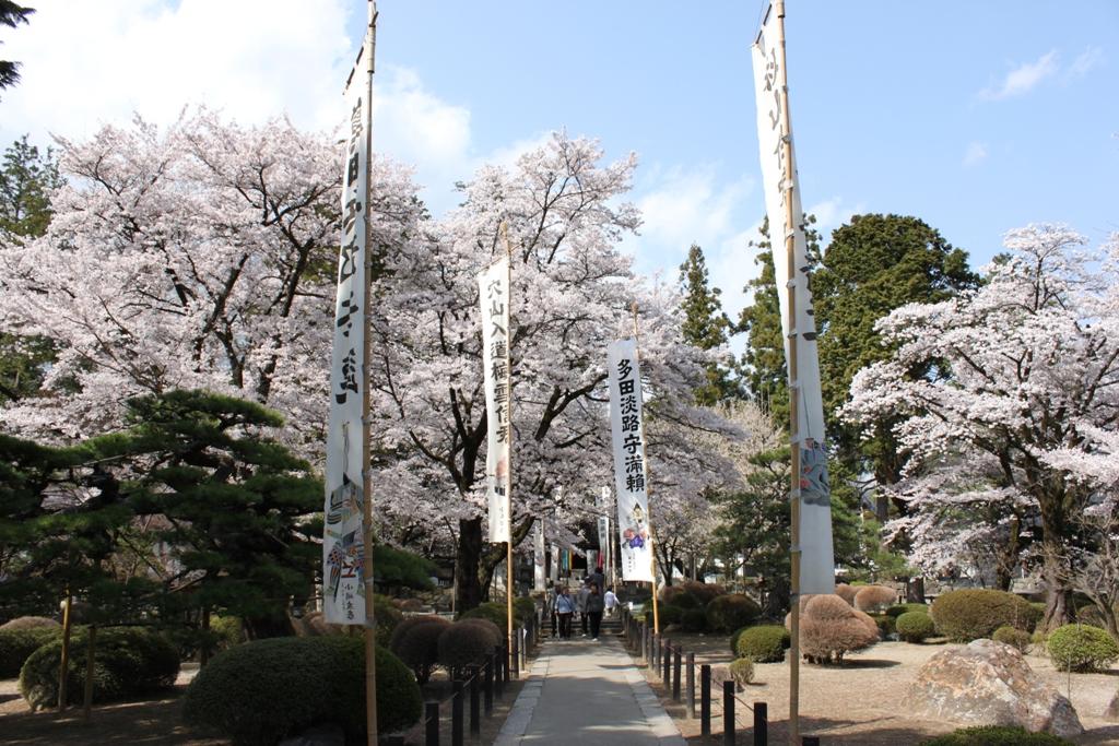 Sakura tour in Yamanashi (13)