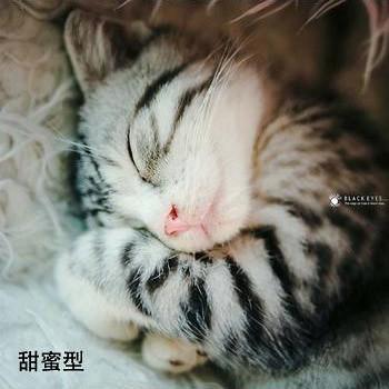 貓的睡姿03