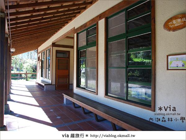 【溪頭一日遊】森林中的夢幻校園~內湖森林小學26