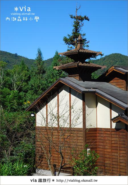 【溪頭一日遊】森林中的夢幻校園~內湖森林小學16