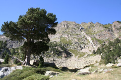 IMG_4403 (Laurent Lebois ©) Tags: laurent lebois laurentlebois france nature montagne mountain montana pyrénées pirineos pyrenees paysage landscape пейзаж paisaje occitanie languedoc roussillon pyrénéesorientales cerdagne