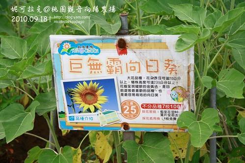 桃園觀音向陽農場20100918-060