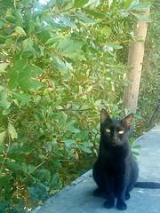 crni - black