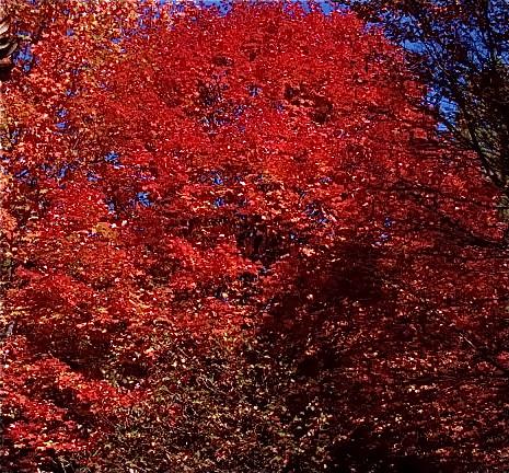 Blue-Ridge-Leaf-Change