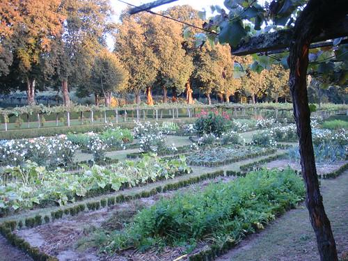 Jardín con distintos cultivos