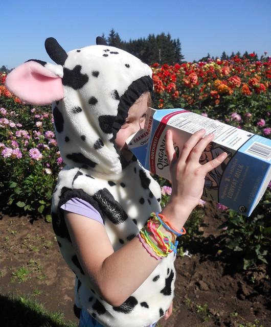 milk contest1