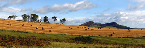 Bales of Hay near the Eildons, Scotland