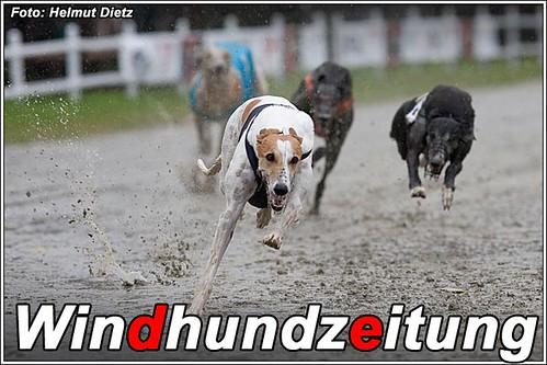 Greyhound Fenomen Co Co