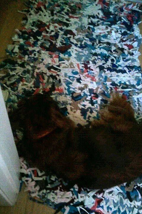 Mr Peanut laying on Homemade Knit Bathroom Rag Rug