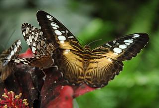 2010.09.26.004 La QUEUE-LEZ-YVELINES - La serre aux papillons
