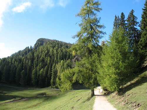 Wegabschnitt durch herrlichen Lärchenwald vor dem letzten Anstieg zum Roen