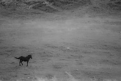 Lost in positive space (Wanja Krah) Tags: bw horse black field animal lost open space tail negative positive